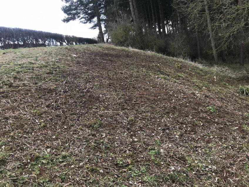 Tree Felling & Clearance -