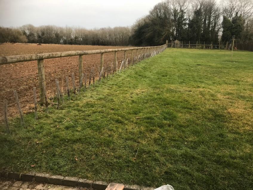 Planting Beach Hedge -